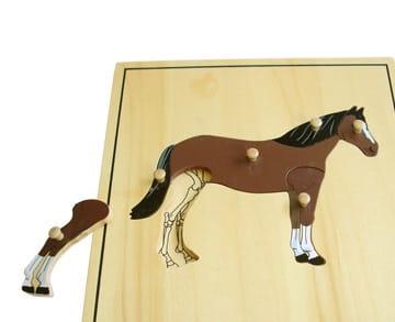 koń szkielet